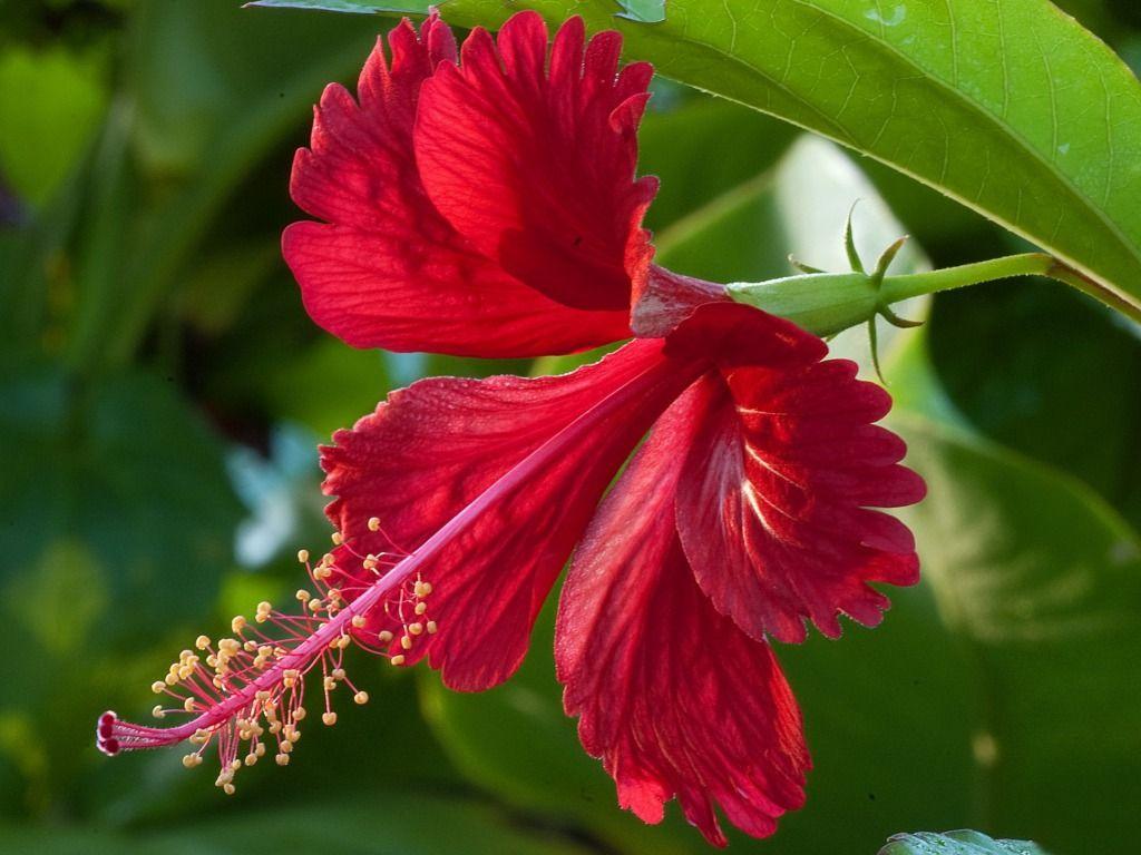 cross section of hibiscus flower - Typesofflower.com ... | Ideas ...