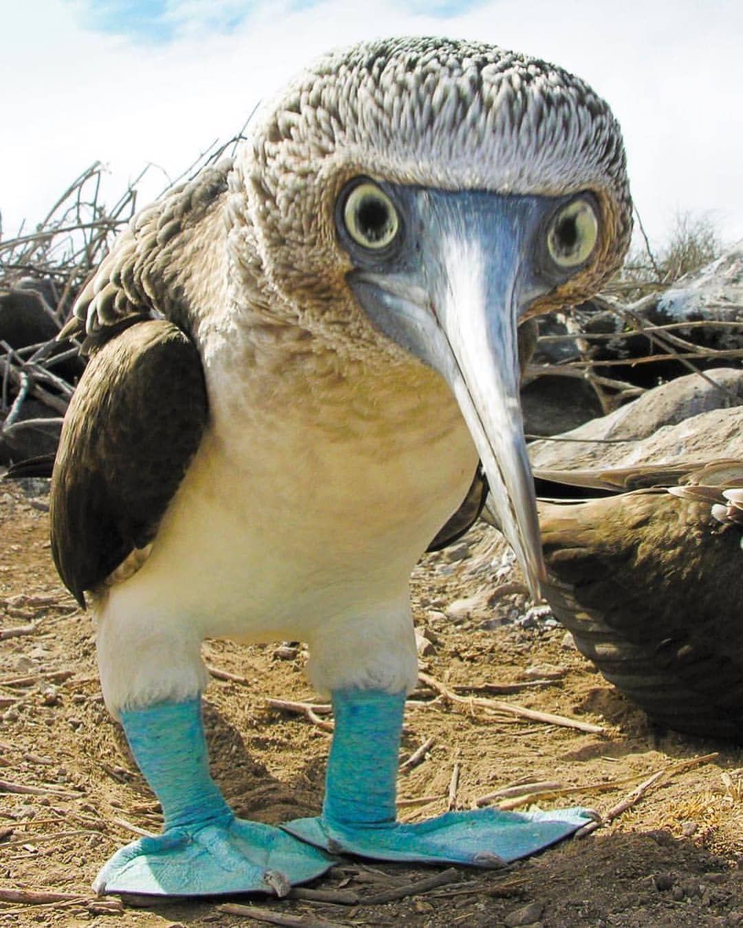 Best Birds Planet On Instagram Congratulations Animals Beautiful Birds Funny Birds