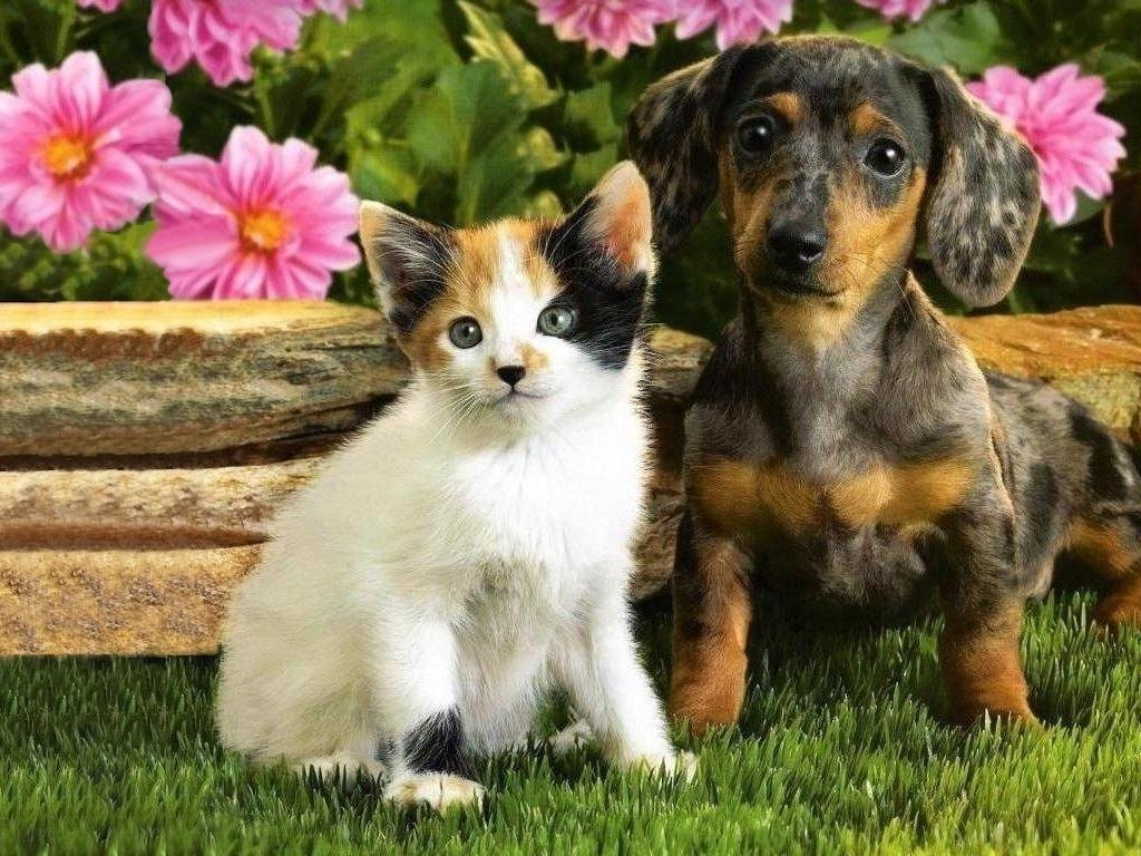 puppy with white kitten picture kittens and puppies to her
