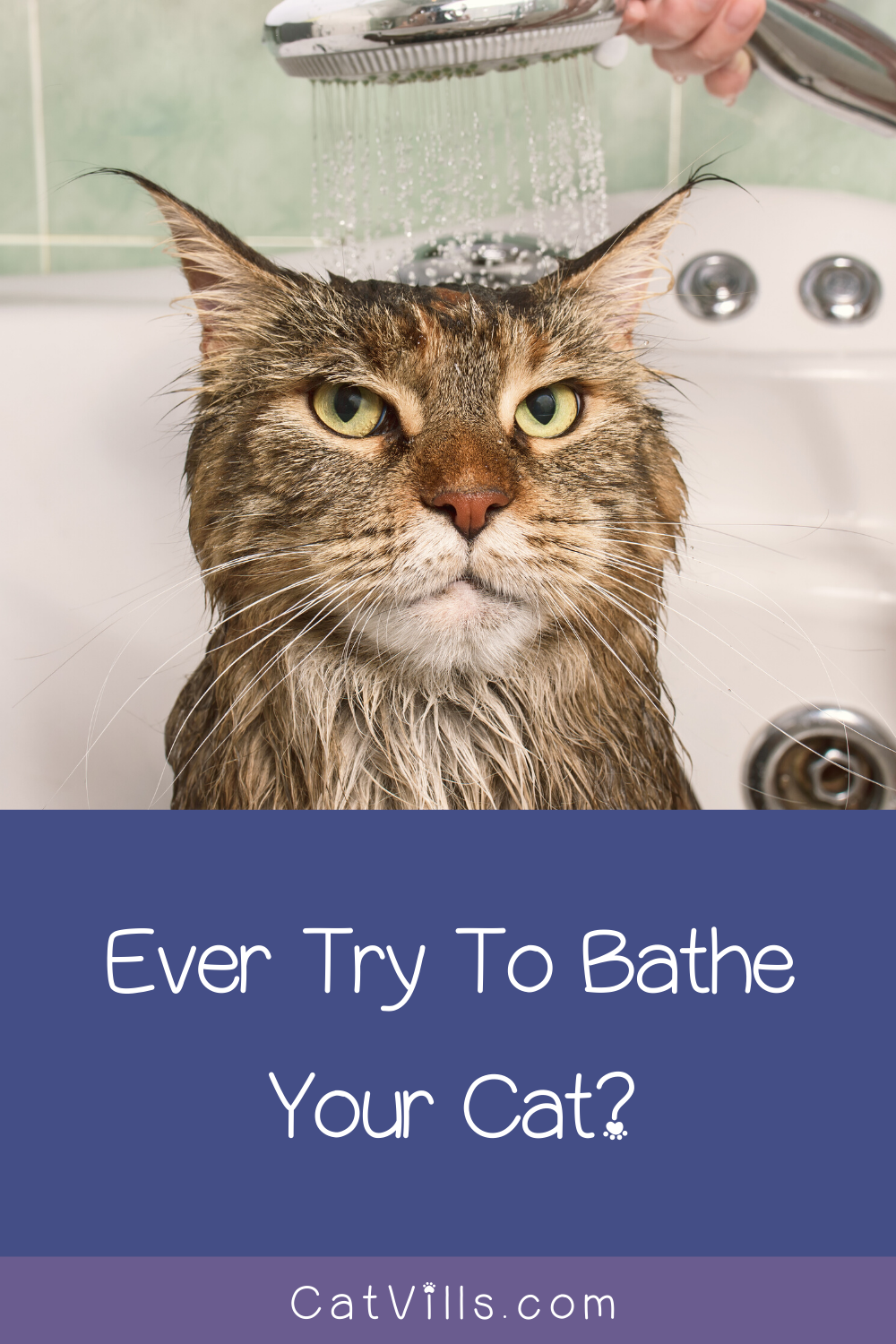 7 Foolproof Tips to Bathe Your Cat in 2020 Cats, Cat