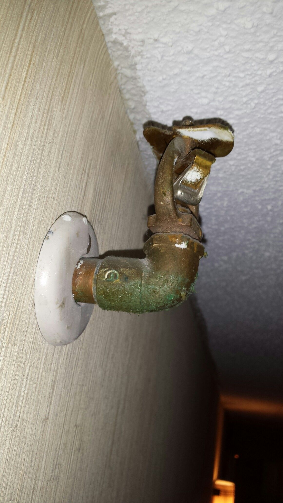 The threat is real! Mold like substance found at