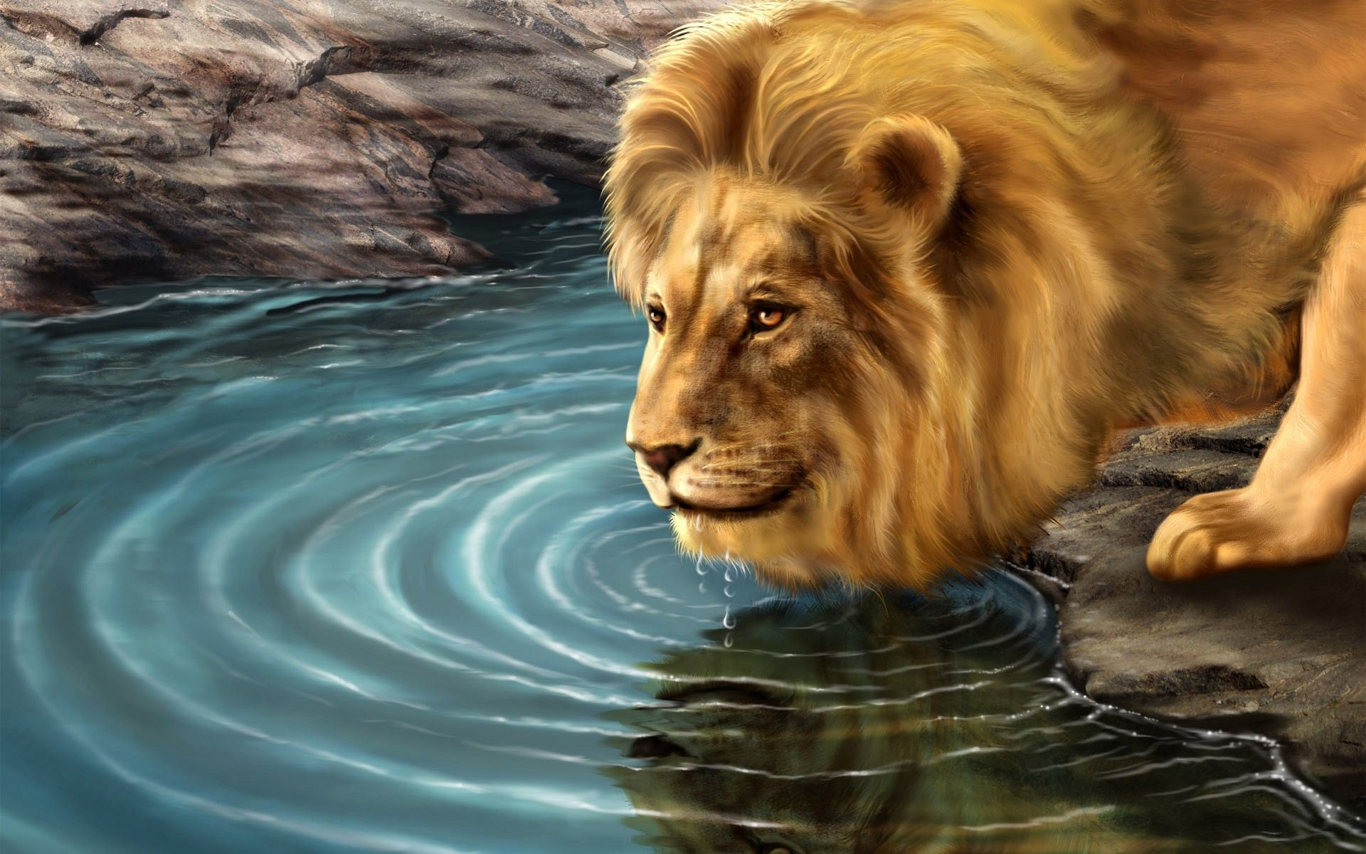 Lion lion water drinking hd wallpapers.jpg â World HD