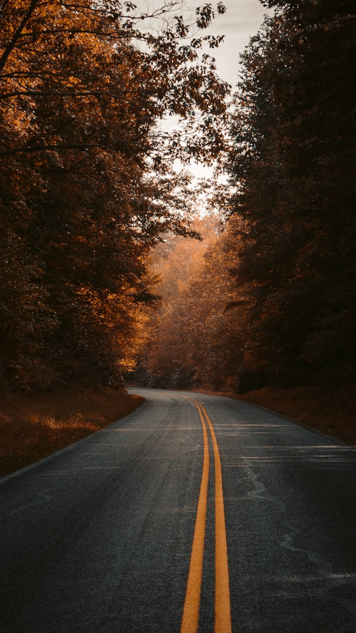 1440x2560 Fall Road Highway Wallpaper Nature Photography Nature Fall Wallpaper