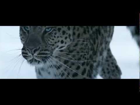Cartier Odissey video