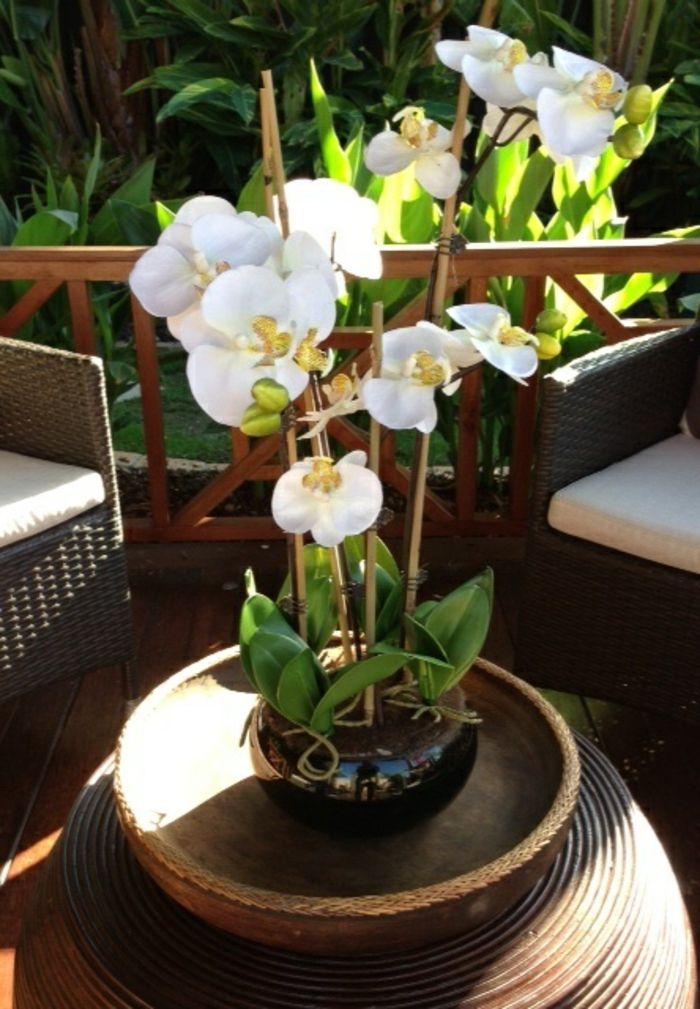 Les fleurs d int rieur les orchid es en 40 images les - Arrosage orchidee d interieur ...