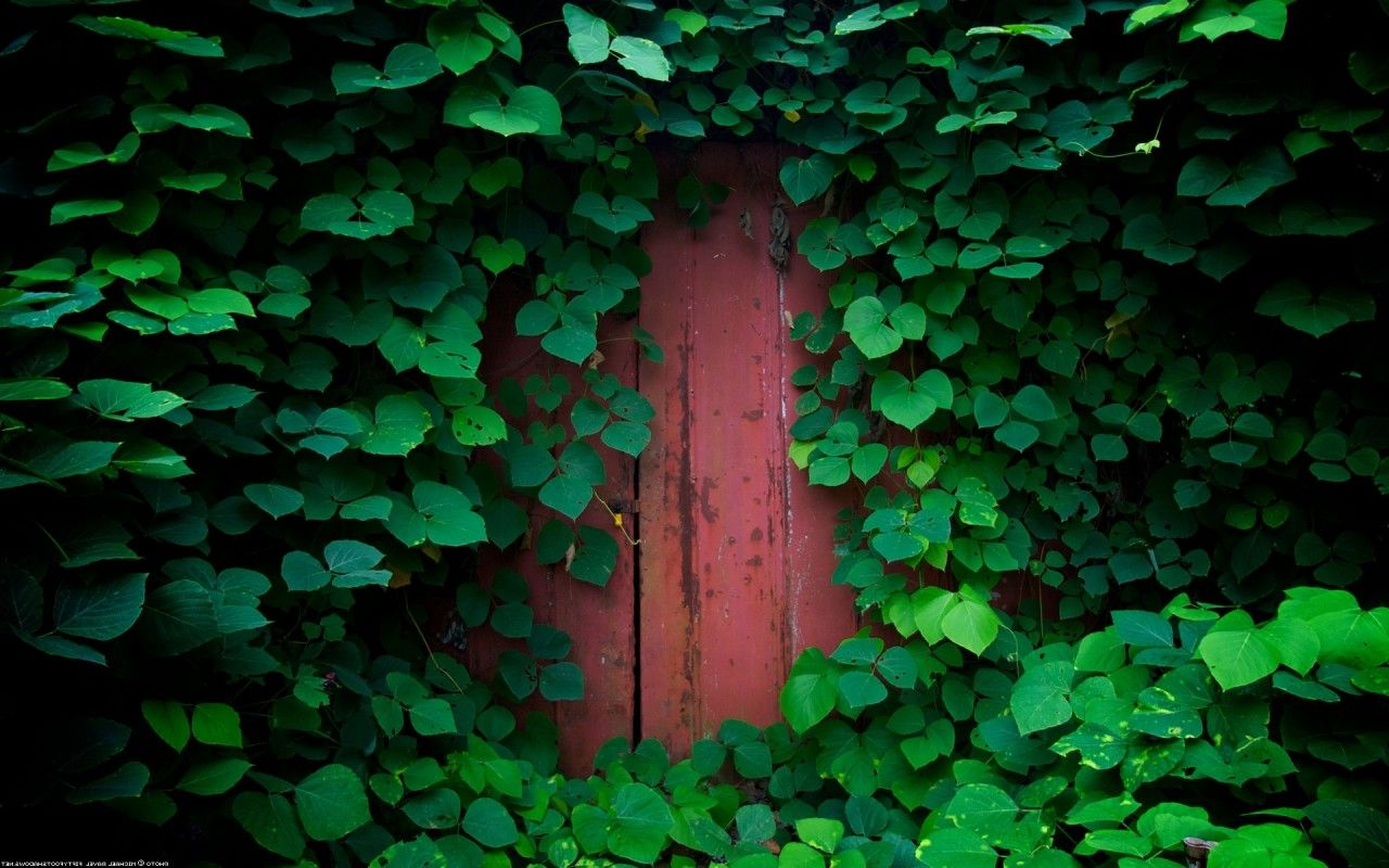 Download Hd Wallpapers Of 108292 Nature Green Door Free Download High Quality Nature Wallpaper Nature Desktop Wallpaper