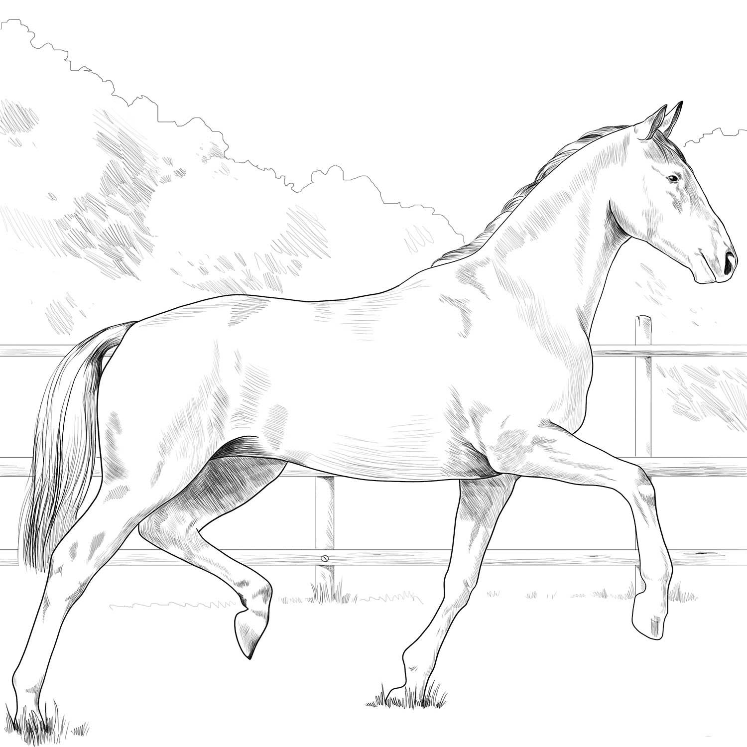Oldenburg Horse Coloring Page Horse Coloring Pages Horse Coloring Horse Coloring Books