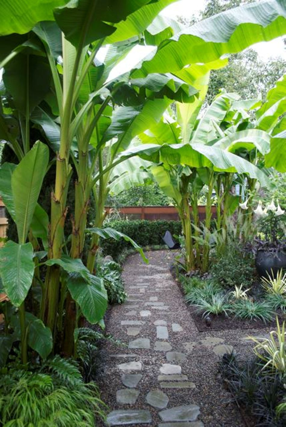 garden with pathway and banana