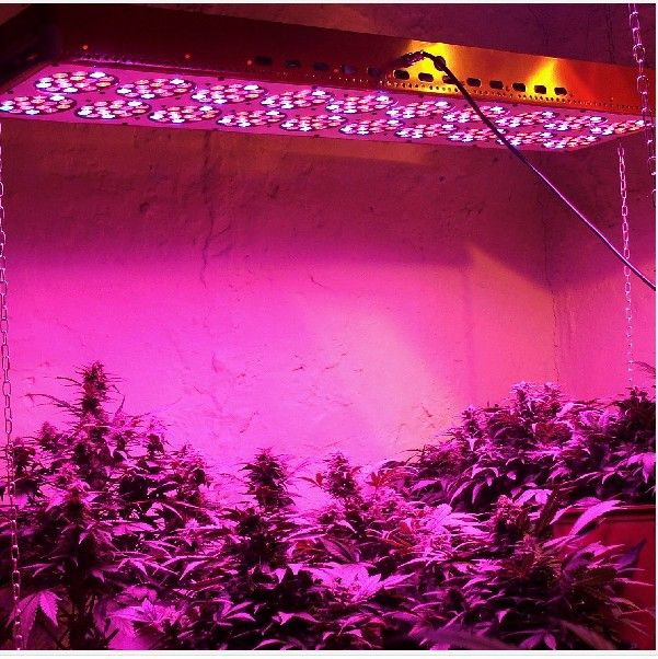 Apollo Led Grow Light Tent Kit For Weed Plant Lights
