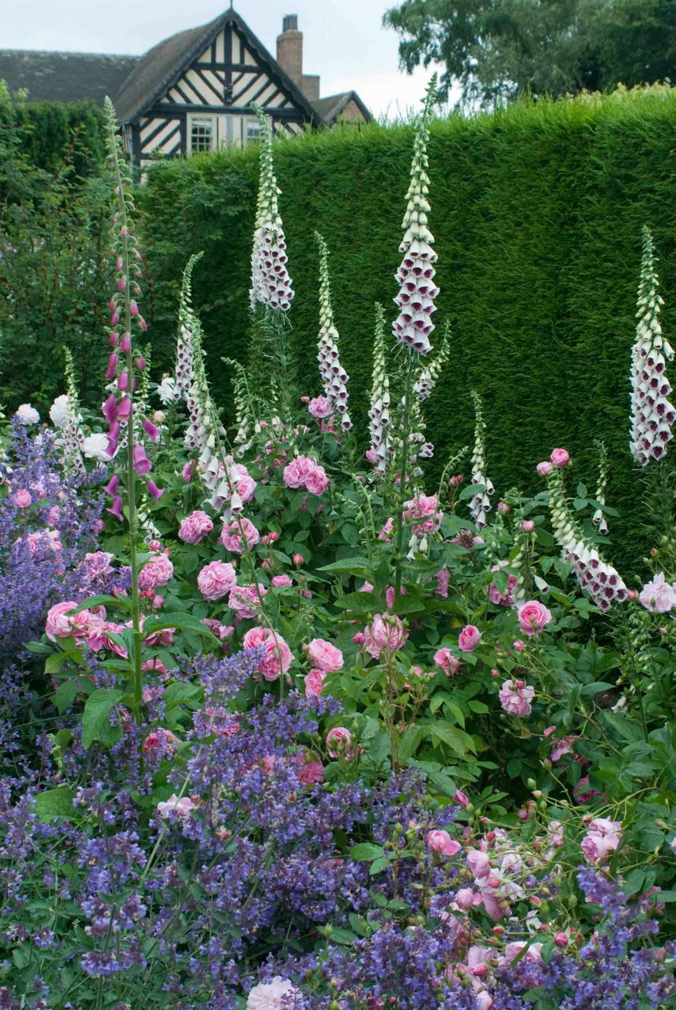 Cottage garten pflanzen  Cottage garden | gardening | Pinterest | Gärten, Gartenideen und ...