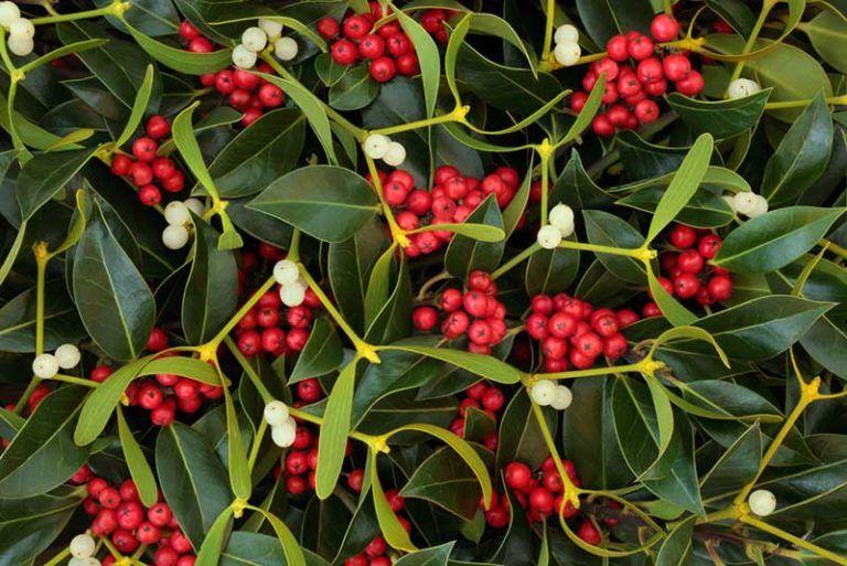 10 bellissimi arbusti resistenti alla siccità