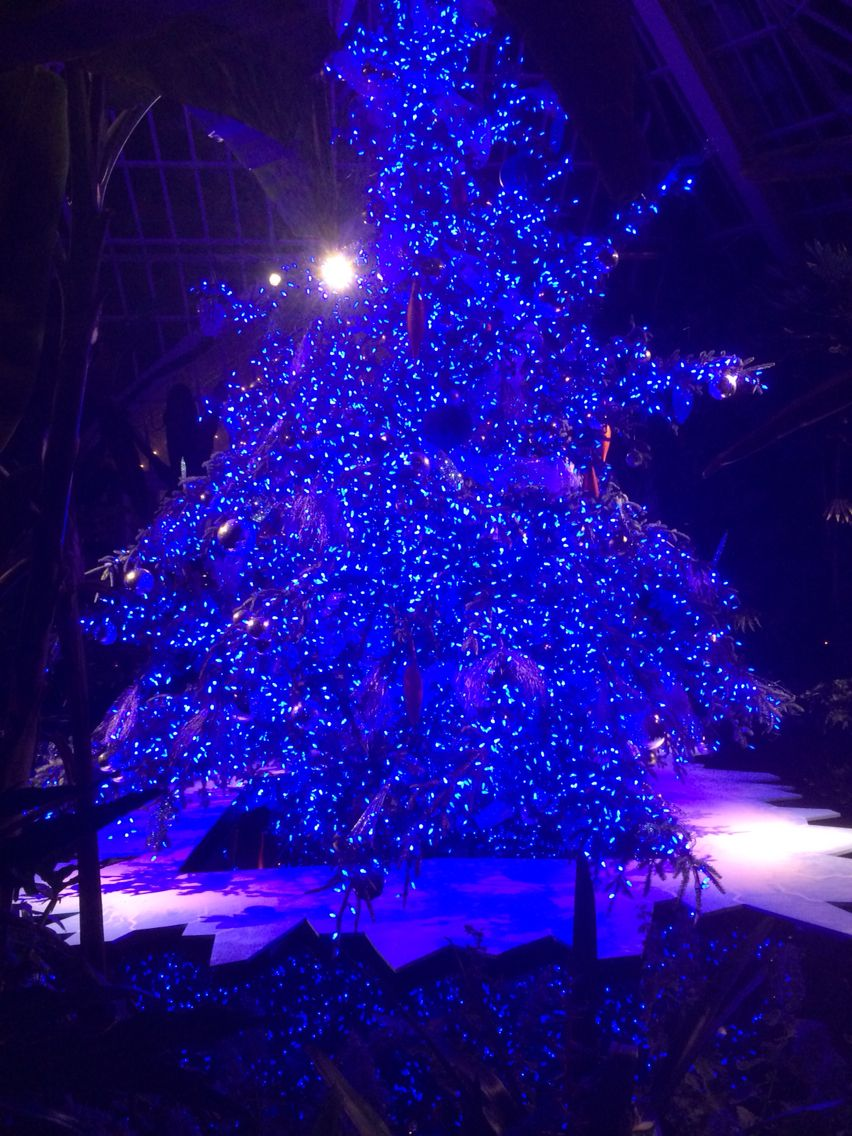 christmas light show phipps conservatory pittsburgh pa