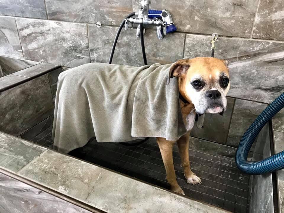 Nub S Mom Said Totally Worth The 10 For A Diy Dog Wash