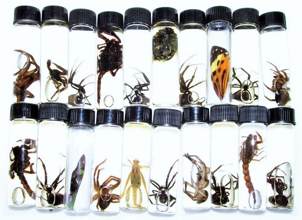 Mixed Lot Of Assorted Real Beetles And Bugs For Sale Bicbugs In 2020 Wet Specimen Orchid Mantis Specimen
