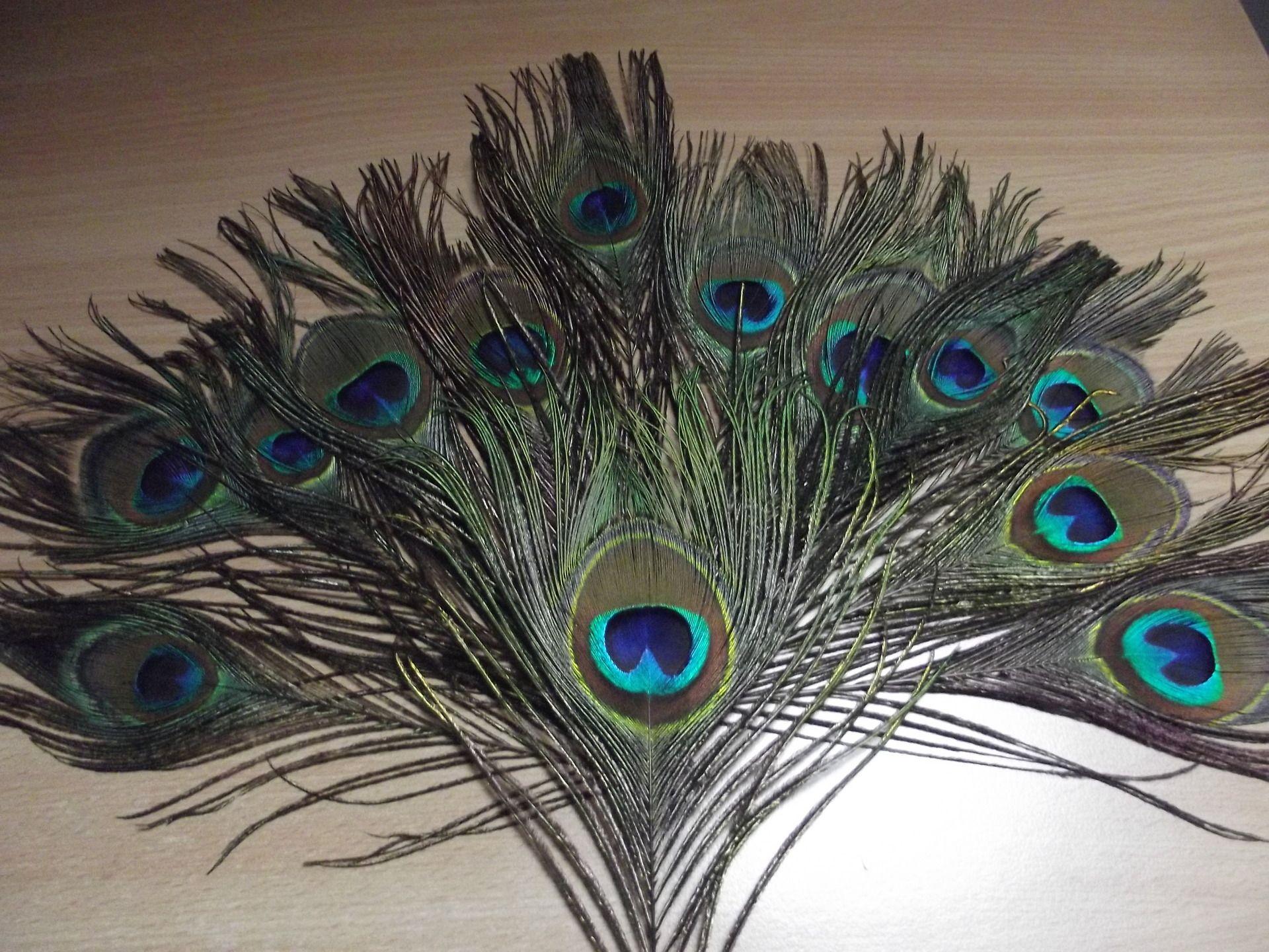 12 plumes de 20 30 cm oeils de la queue de paon pour bouquets d co d coration de table. Black Bedroom Furniture Sets. Home Design Ideas