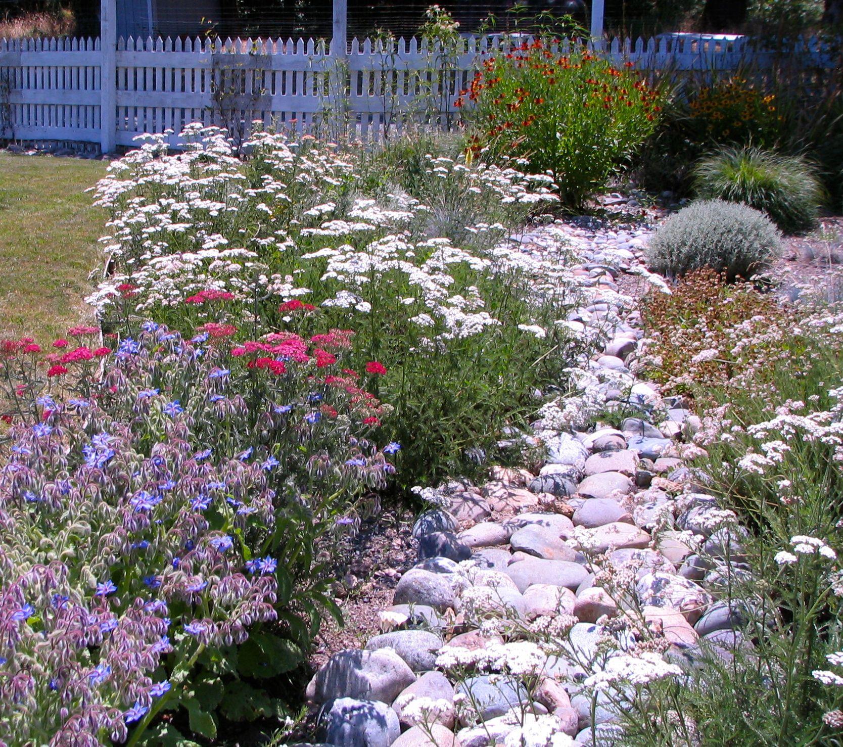 A Rain Garden Planted With Natives Helps Retain Rainwater 400 x 300
