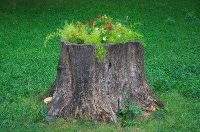 Plant flowers in tree stumps vs. ignoring tree stumps. yard-garden