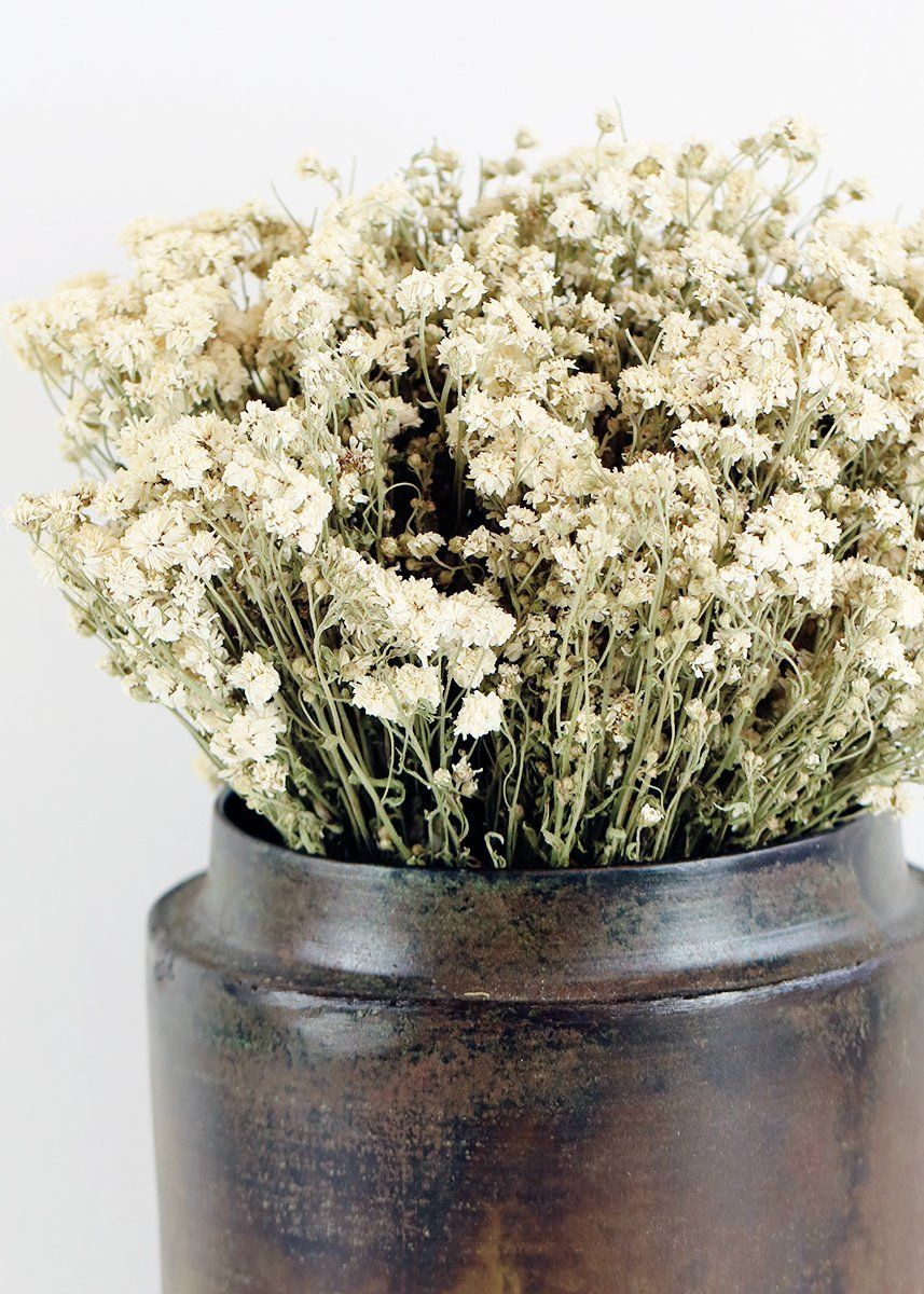 Natural Pearl Yarrow Dried Preserved Flowers Afloral Com How To Preserve Flowers Wildflower Bridal Bouquets Dried Flowers