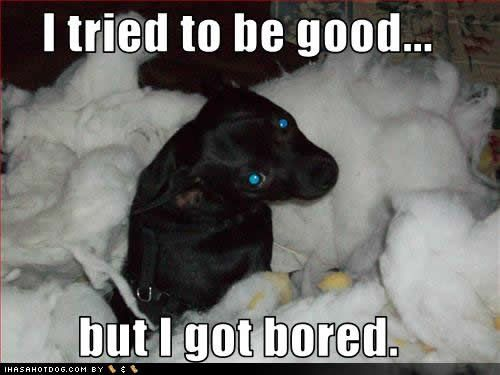 Dog Quotes Dog Quotes Funny Dog Quotes Funny Dog Pictures