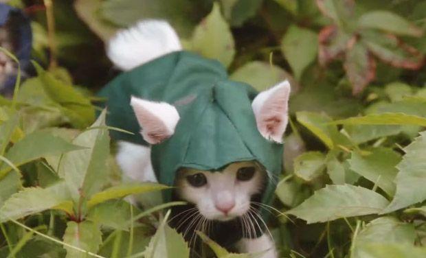 Assassin S Kitteh Cute Kills Kittens Fantastic Beasts Assassin