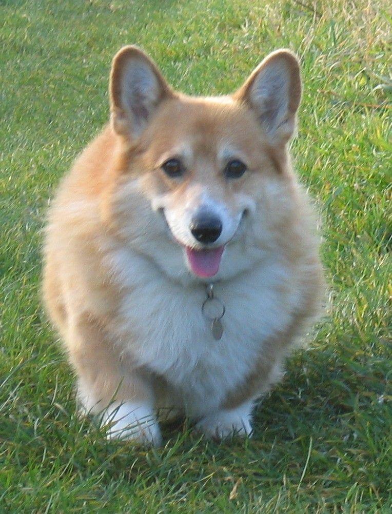 Great Heavy Chubby Adorable Dog - 829b96fcf4d6d57b39038bc7248aa238  Photograph_60904  .jpg
