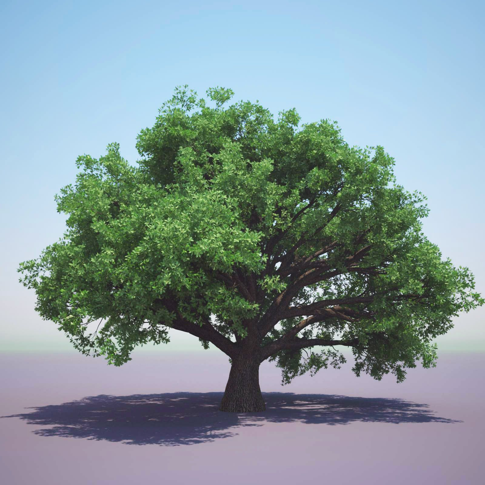 tree 3d model free resources pinterest 3d and reference images