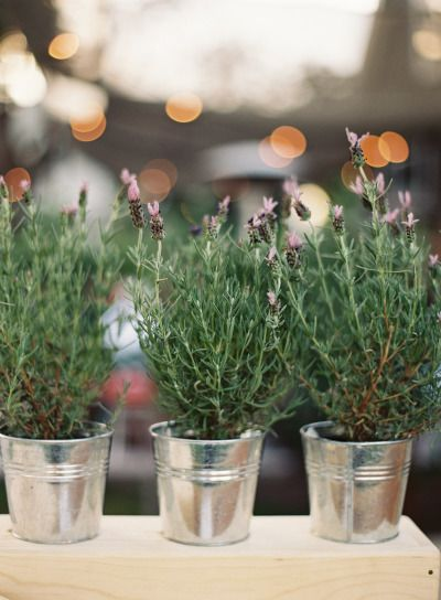 Use potted plants (lavender) in galvanized steel buckets for décor that you can take home after the wedding and plant in your yard or transplant into bigger containers for your patio