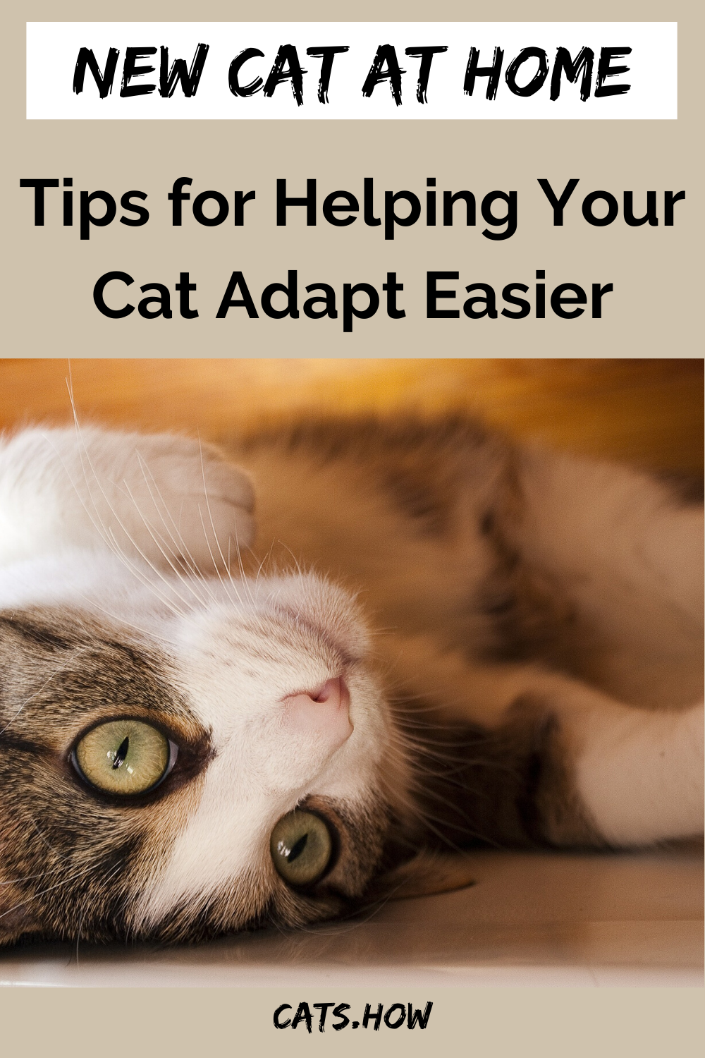 How Do Cats Adapt To A New Home Cats How In 2020 Cats Introducing A New Cat Cat Advice