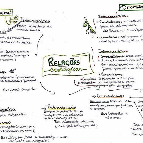 Resumenem Instagram Photos And Videos Relacoes Ecologicas Ecologia Enem Resumos Enem
