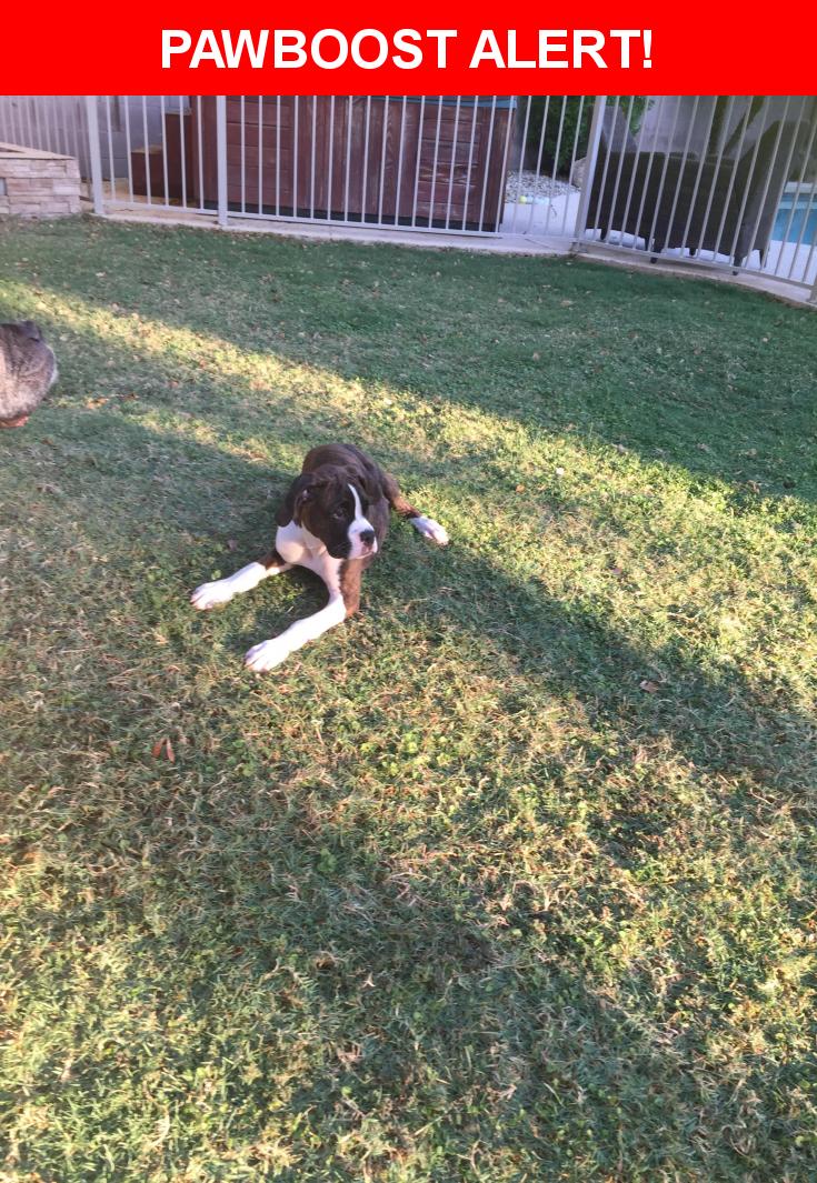 Please spread the word! Gracie was last seen in Glendale, AZ 85308.  Description: Female, brindle boxer puppy  Nearest Address: Hwy 101 Loop, Scottsdale, AZ, United States