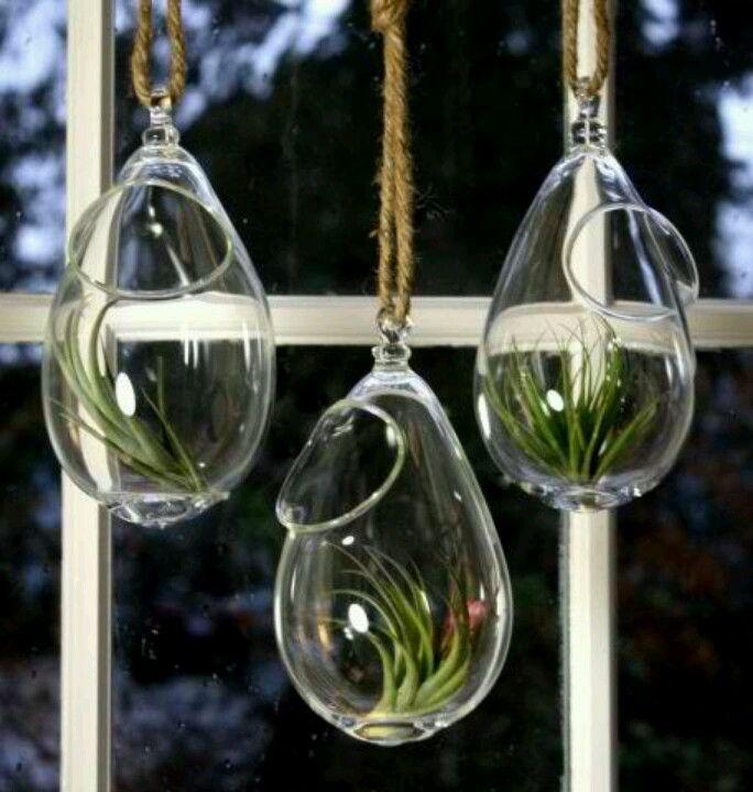 Glass Plant bulbs
