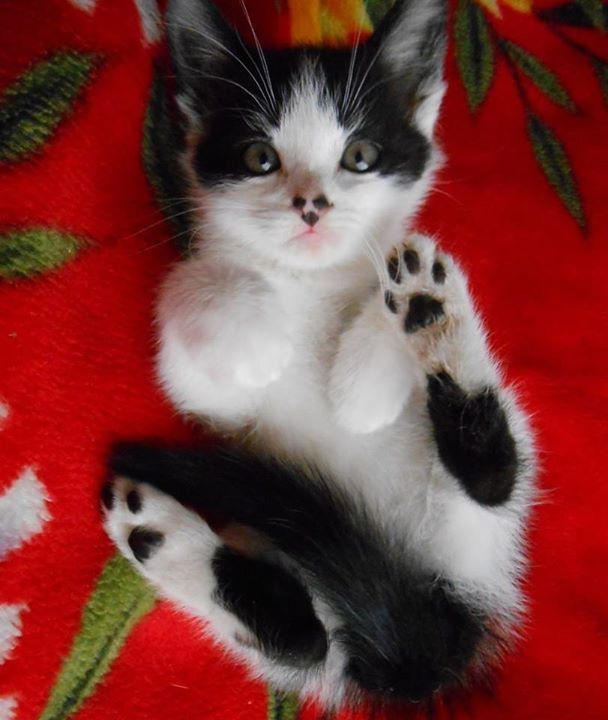 Miss Kitty <3 #cats #love #instagood #photooftheday #beautiful #cute #happy #fashion #followme #me #follow