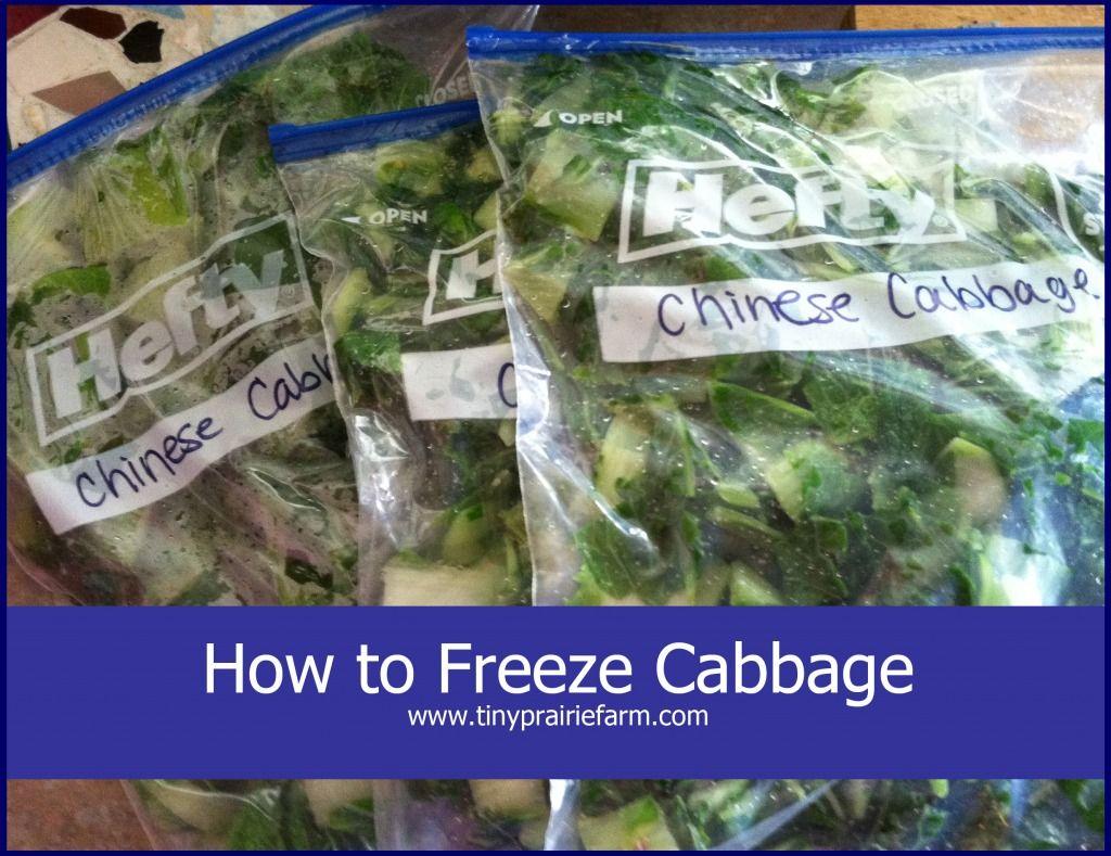 Blanching and freezing cabbage freezing cabbage freezer