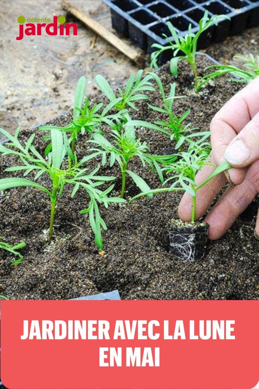 Jardiner Avec La Lune En Mai 2020 Permaculture Garden Plants