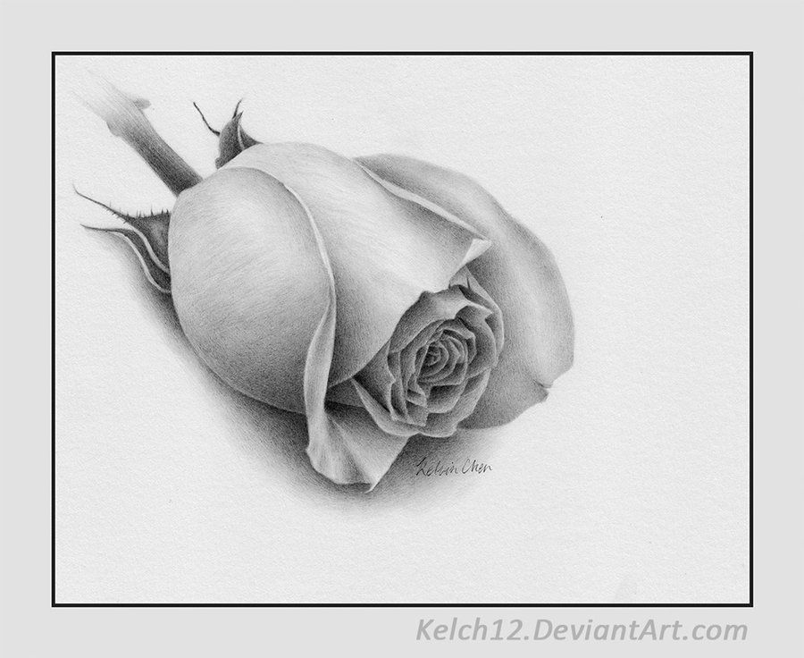 L Amour Fine Art Drawing Drawings Pencil Drawings