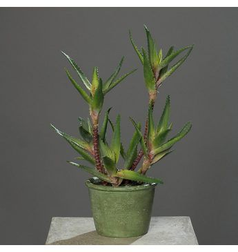 Home affaire Kunstpflanze »Agave im Topf« Jetzt bestellen unter: https://moebel.ladendirekt.de/dekoration/dekopflanzen/kunstpflanzen/?uid=3f2e91a4-698f-517e-9c14-02b54286c1ee&utm_source=pinterest&utm_medium=pin&utm_campaign=boards #kunststoffpflanzen #dekopflanzen #kunstpflanzen #dekoration
