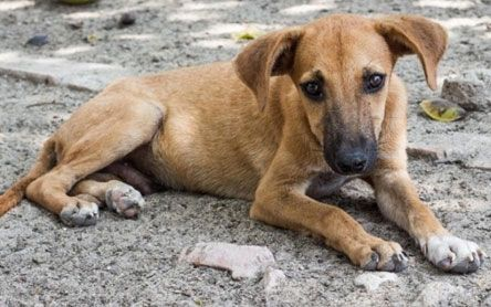 In Defense Of Animalsstop India S Stray Dogs From Becoming Dog