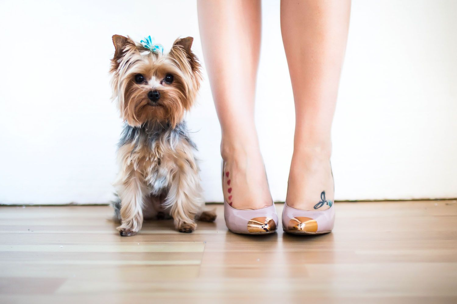 Sweetest, spunkiest, most perfect Yorkie on the block and some funky little foot tats, all dressed up. ajaynewrites.com coming soon! (For design/color reference: electric blue, gray, nude, gold)