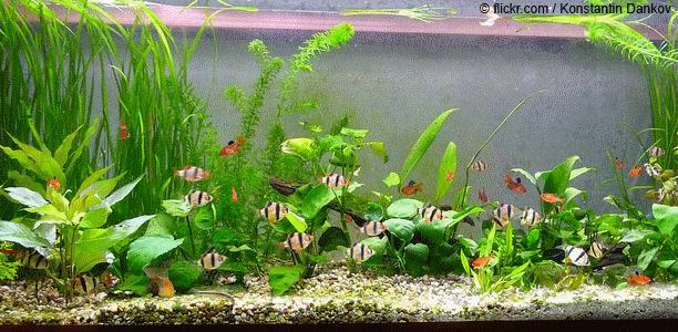 aquarium aquarium eine kleine welt erschaffen pinterest aquarium ber familie und. Black Bedroom Furniture Sets. Home Design Ideas