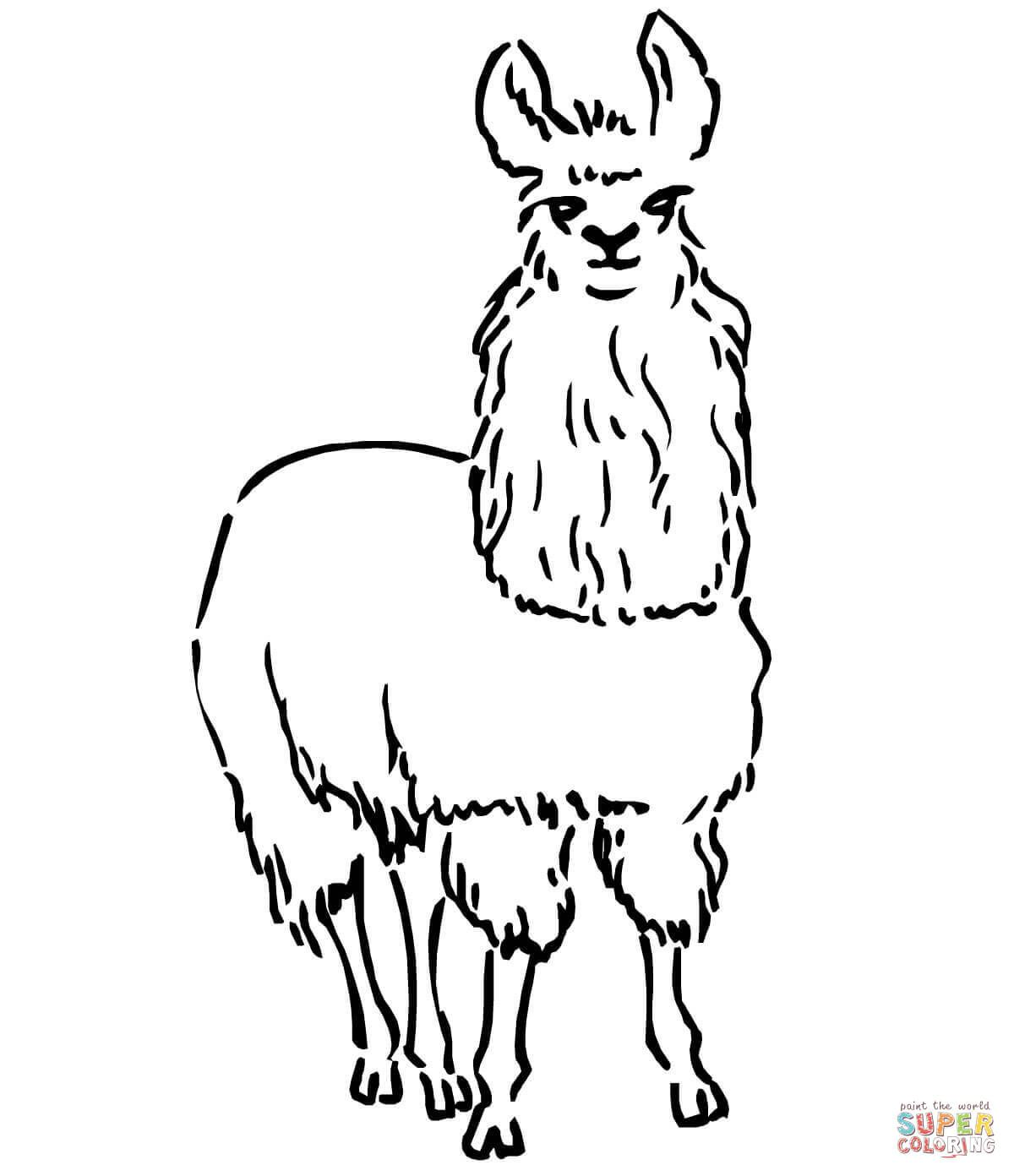 South American Llama Coloring Page  Johns Birthday  Pinterest
