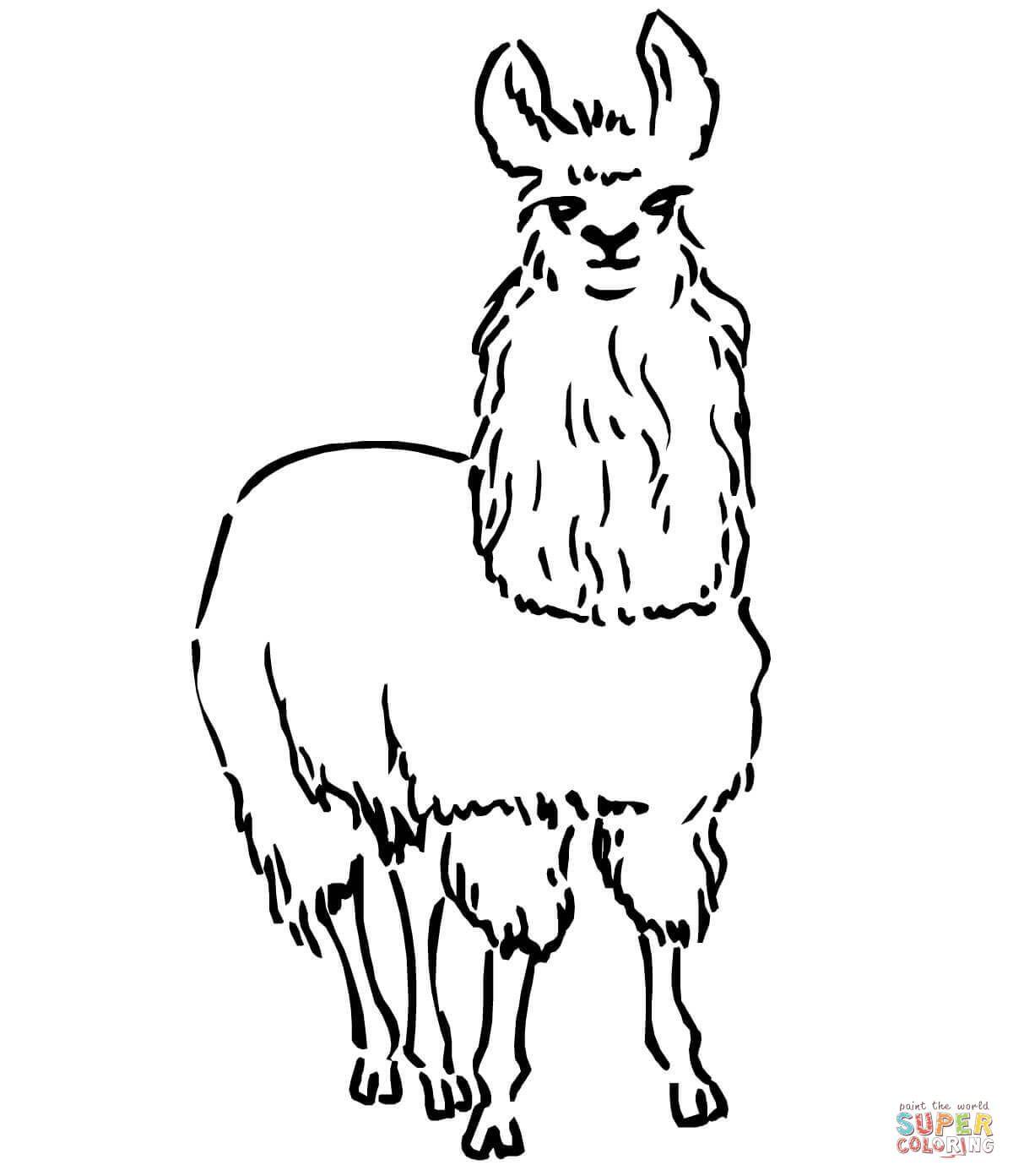 south american llama coloring page john s birthday pinterest