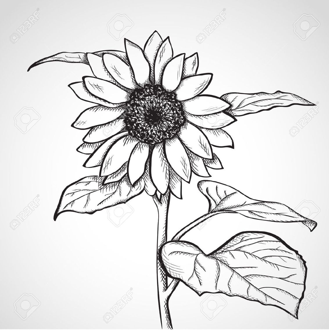 Sunflower sketch black and white tattoo Sunflower