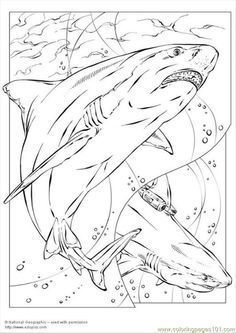 sharks and rays coloring page  coloring pages bull shark