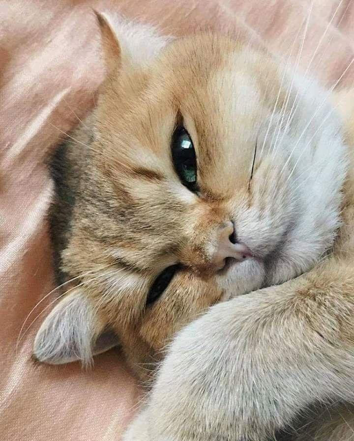 Sleepy, sleepy... Cats and kittens, Kittens cutest