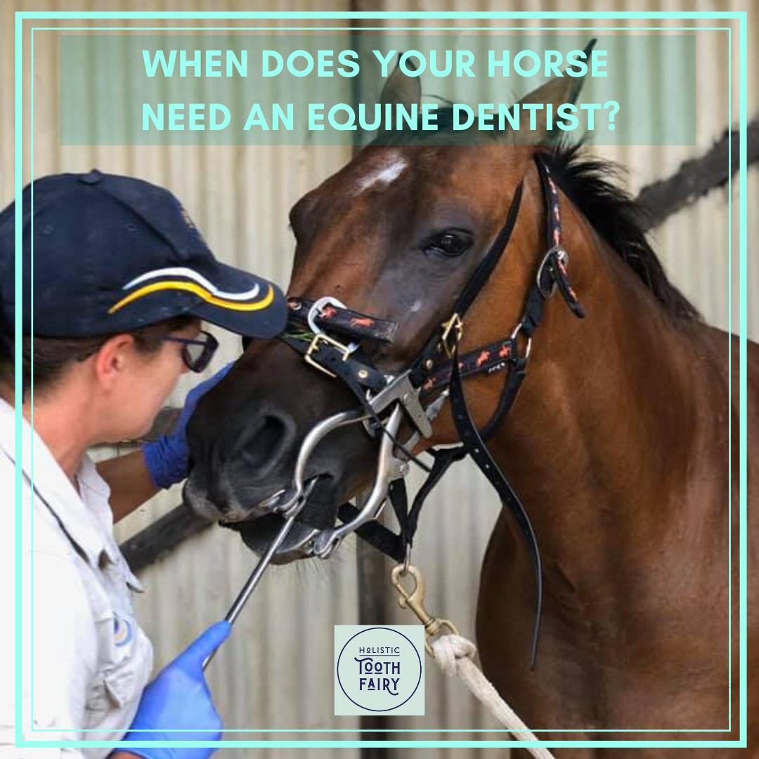 Horse Teeth Vs Human Teeth In