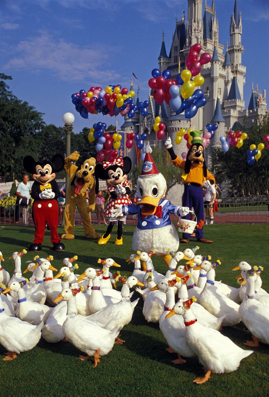 Donald Duck celebrates his birthday with family and