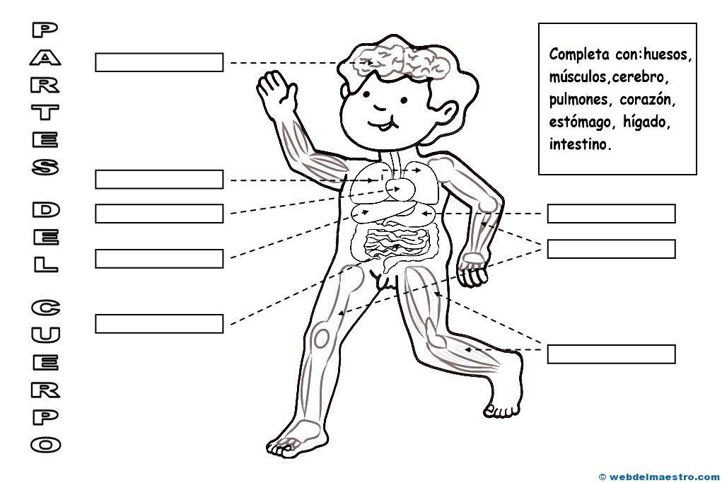 Le parti del corpo umano. | Cos humà | Pinterest