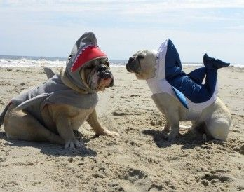 Two Boys At The Beach Pet Costumes Pet Costumes Contest Pet