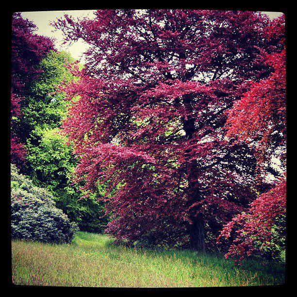 Parc Marguerite Yourcenar - Mont Noir | F L O W E R S ☆ | Pinterest ...