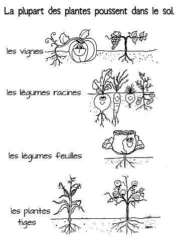 Resultado de imagen de les plantes en fran ais ducation for Vegetal en anglais